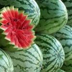 Арбуз, полезные свойства волшебной ягоды