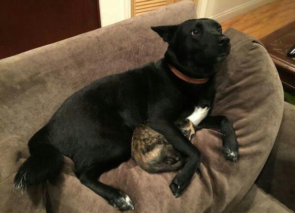 Пёс охраняет кота во время грозы