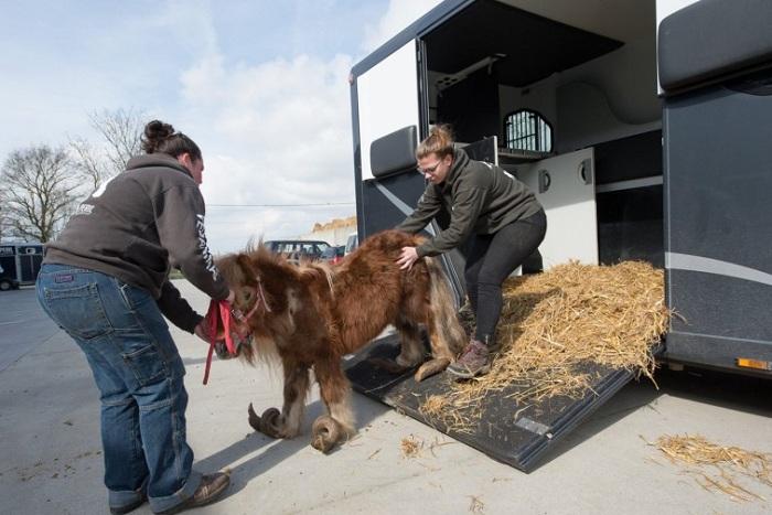 Чудесное спасение пони, которого держали взаперти много лет