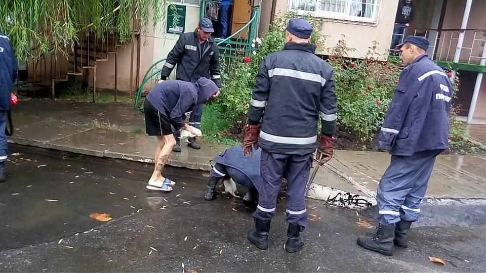 2 белых щенка тонули под тротуарной плитой. К счастью, МЧС-совцев Черноморска не надо было просить дважды…