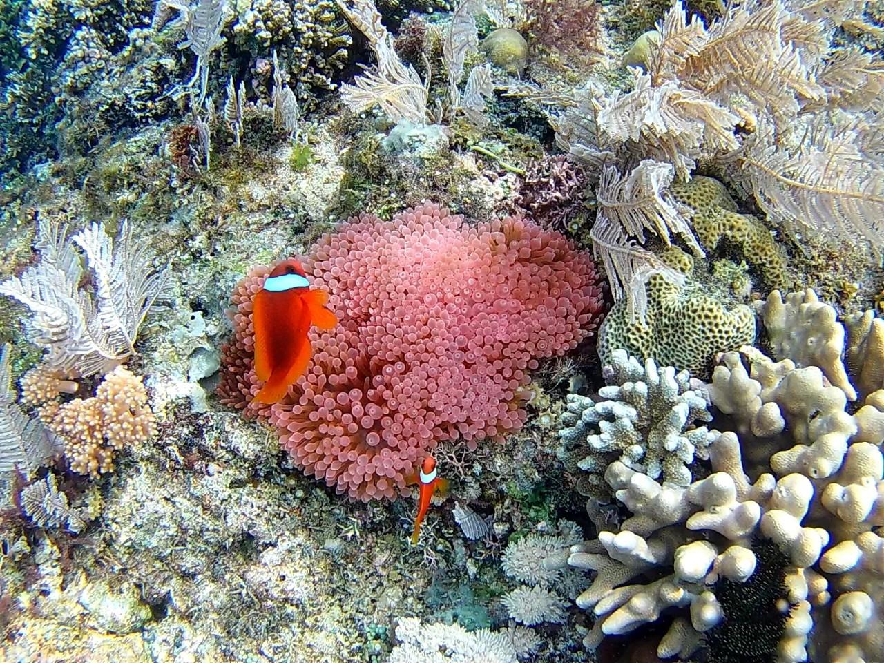 Все красоты подводного мира. Филиппины