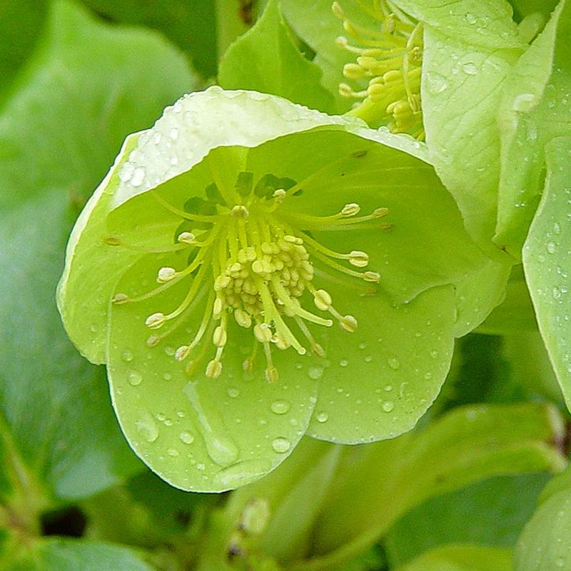 """Растения для сада в """"японском стиле"""" Любимые цветы"""