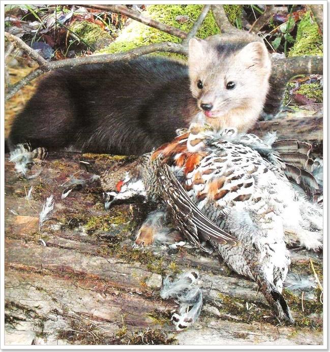 Мир природы Хабаровского края (Фауна)