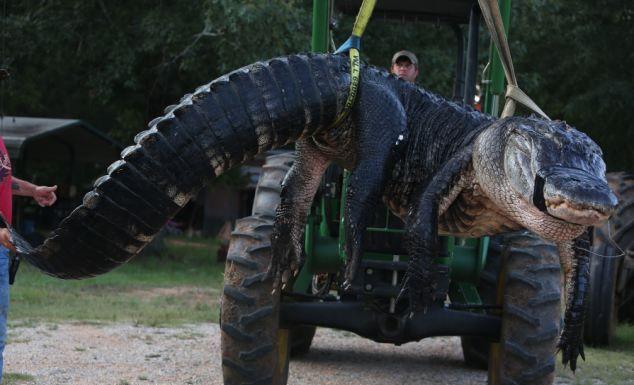 Семья охотников поймала самого крупного в мире крокодила