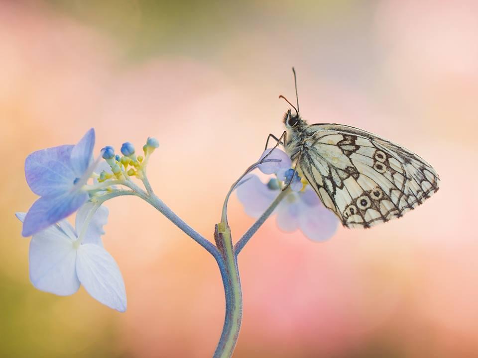 Мухи, пчелы бабочки и львы, а кто же ты?)
