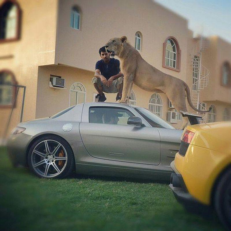 catsncars31 Хищные кошечки и дорогие машины: досуг арабского миллионера