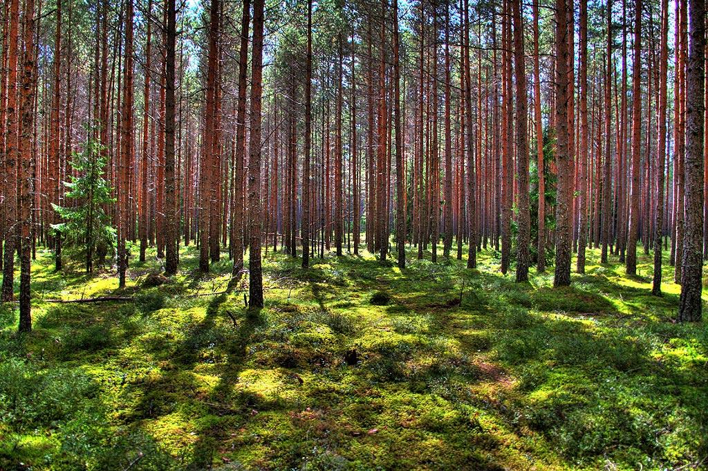 Знакомьтесь, Эстония