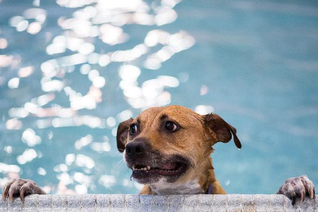 Собачье шоу на прогнозе погоды - лучший способ обрести хозяев