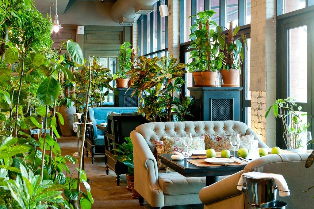 Дизайн интерьера с комнатными растениями