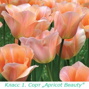 Какие бывают тюльпаны?