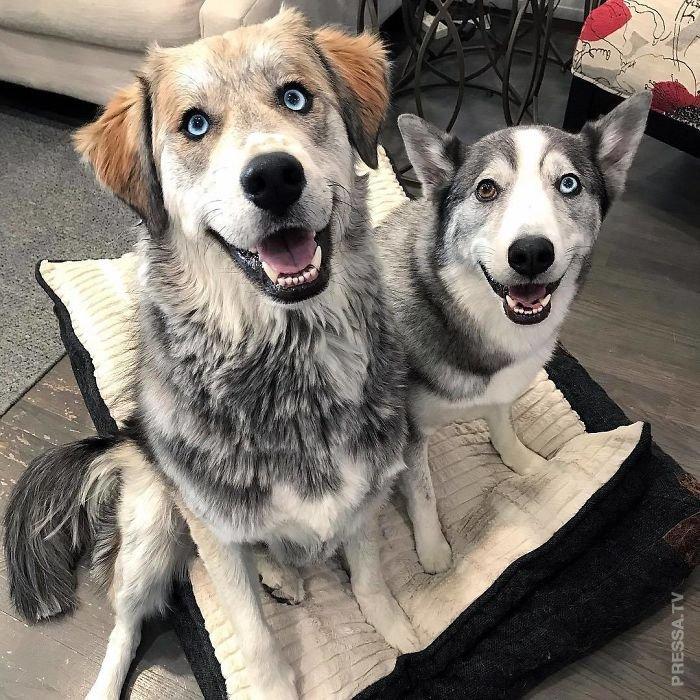 Гибридные собаки — потомки о…