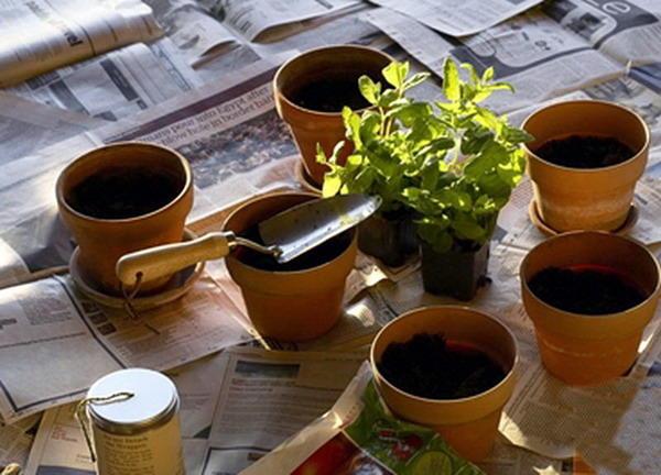 Как правильно пересадить комнатные растения: грунт, горшок, дренаж и ножницы