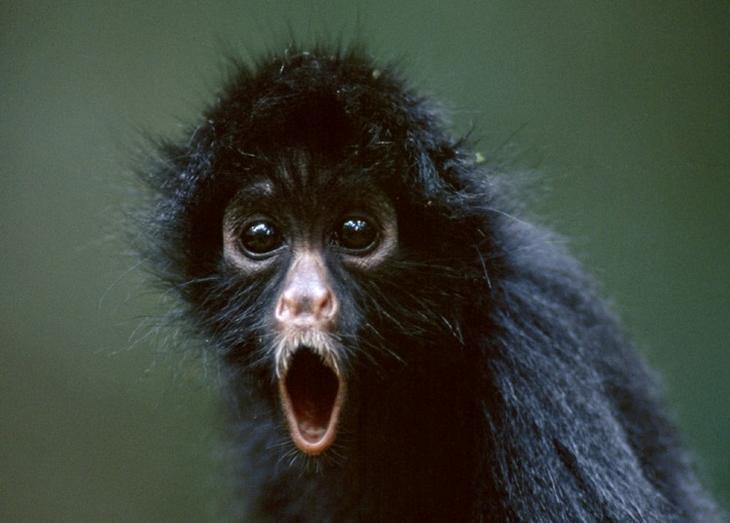 С такими эмоциями им бы в кино сниматься: 18 смешных фото животных