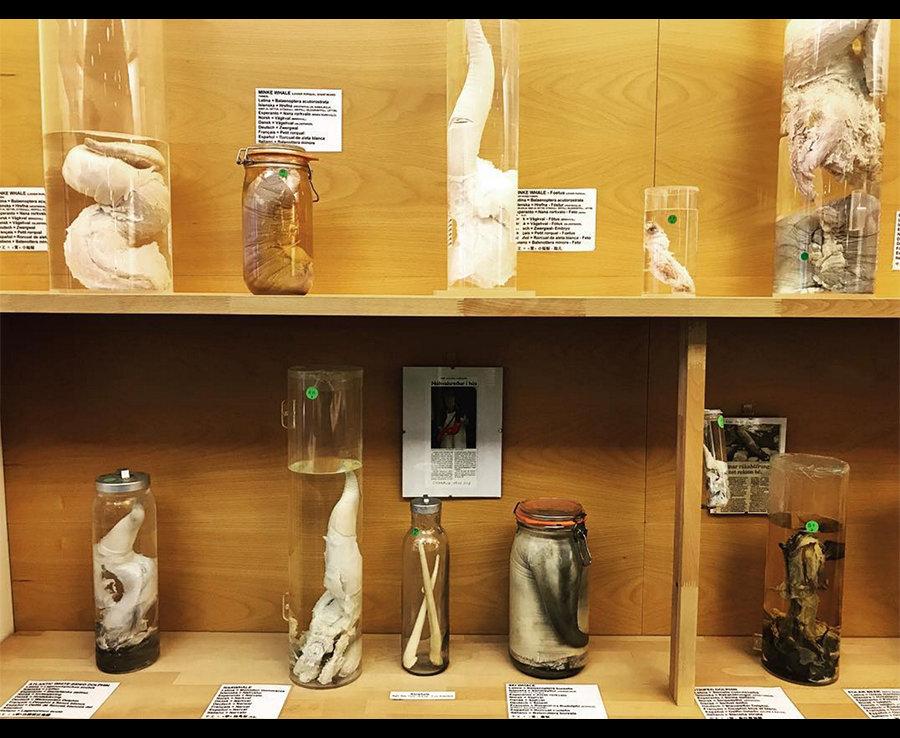 Порно фото коллекция члены