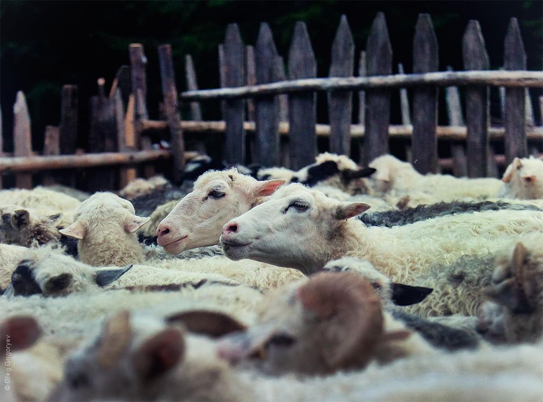 Cioban18 Жизнь чабанов на полонине