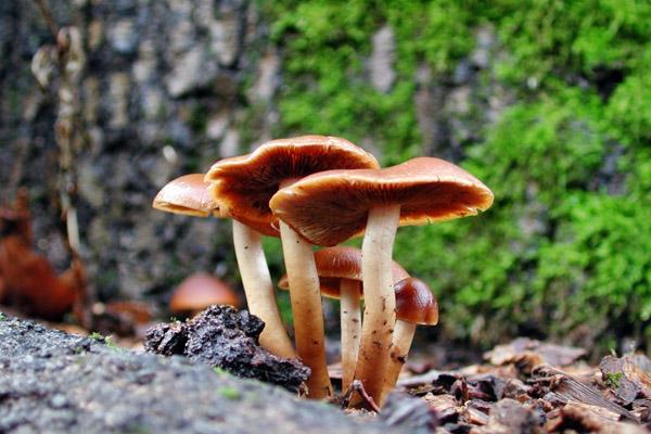 Календарь грибника, грибной календарь, календарь грибника на 2014 год, определитель грибов, календарь грибника на лето, календарь грибника на осень, когда собирать грибы, как отличить съедобные грибы, как отличить ядовитые грибы, календарь грибника для Московской области, календарь грибника для Ленинградской области