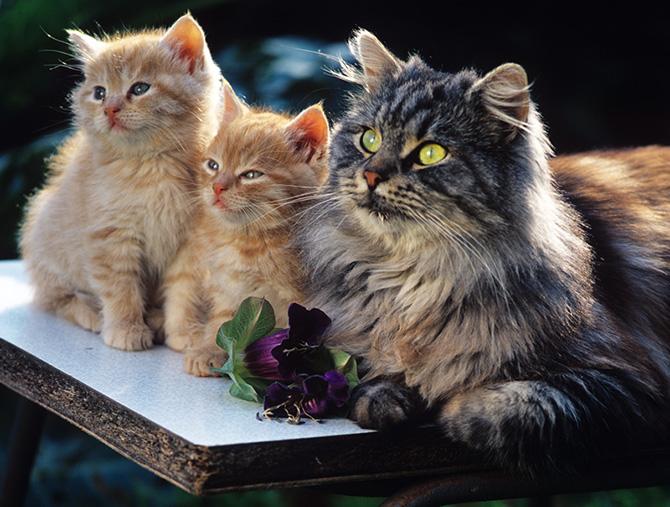 Великолепная тройка