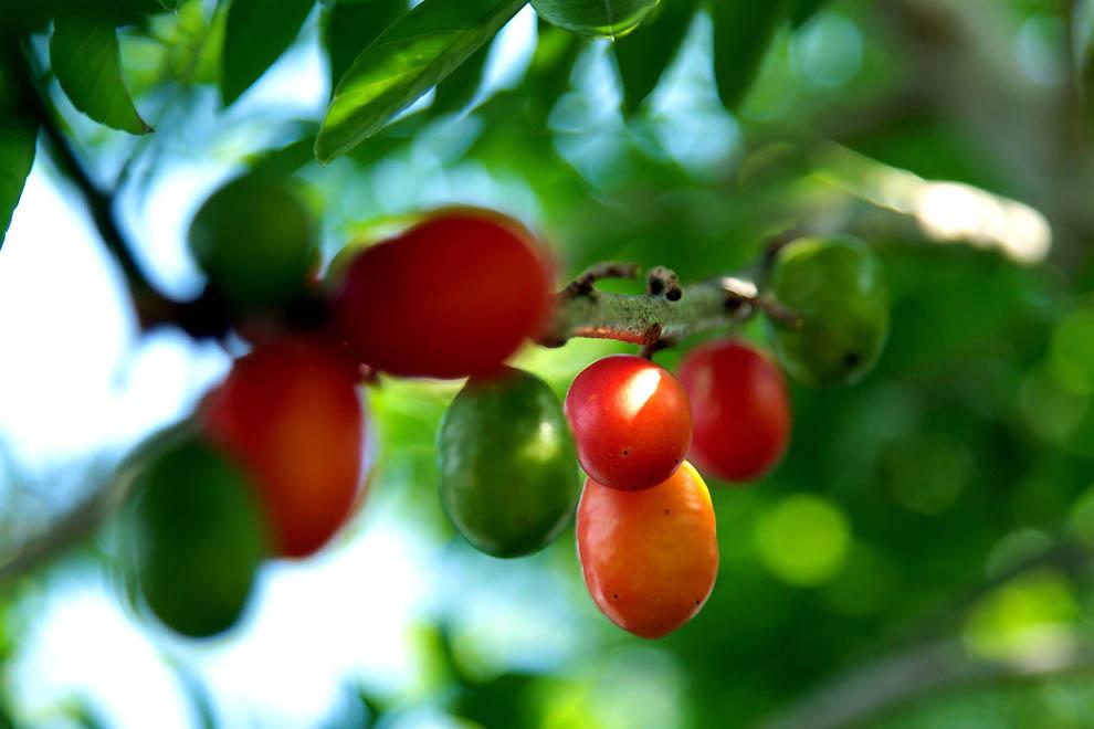 1618 Экзотические фрукты