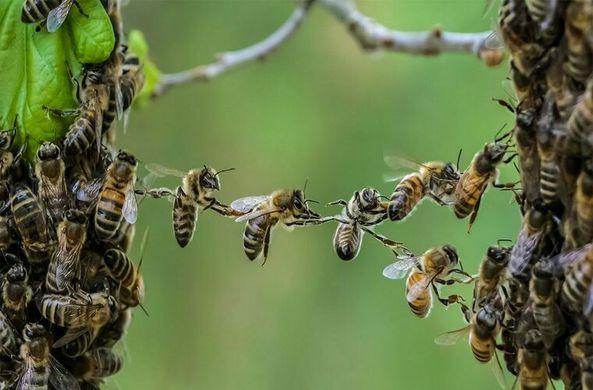 В США пчелы облепили оставленный на улице велосипед