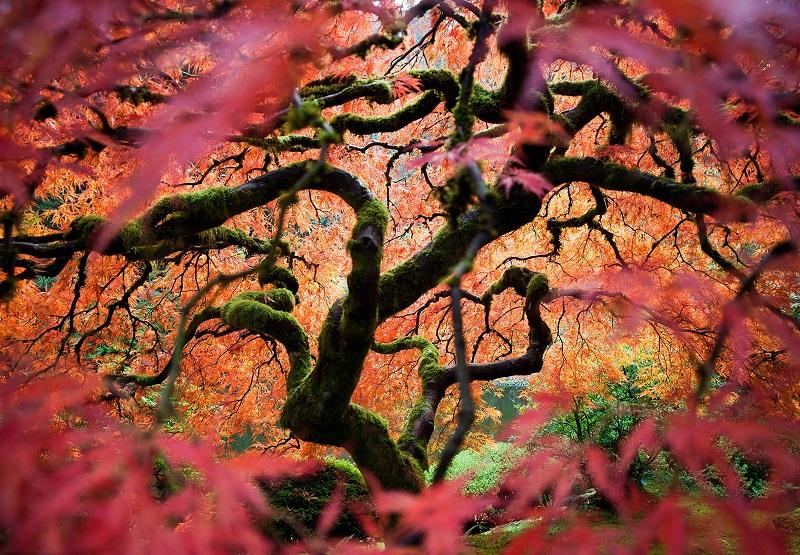 Осенний японский сад в Портленде, США