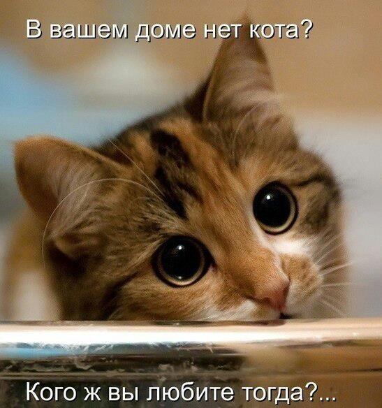 Фотобзор — котик, как незаме…