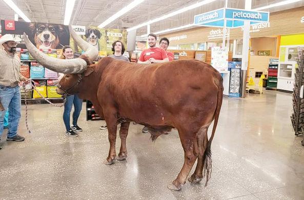 Владелец быка проверил, пустят ли его в магазин с питомцем на поводке