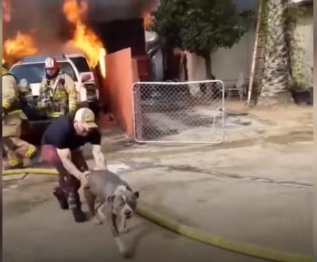 В США пес остался на привязи в горящем доме. Хозяин бросился за ним прямо в огонь