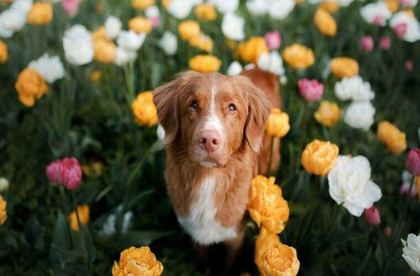 Ученые выяснили, что собаки способны сопереживать хозяевам