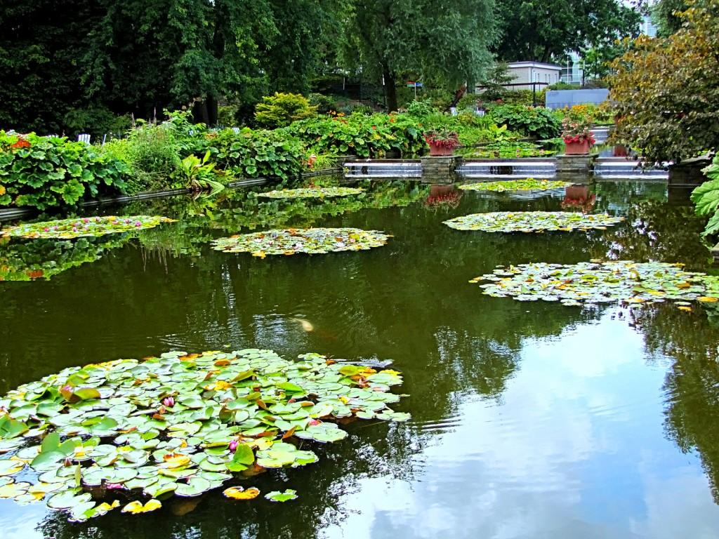 В Ботаническом саду Гамбурга