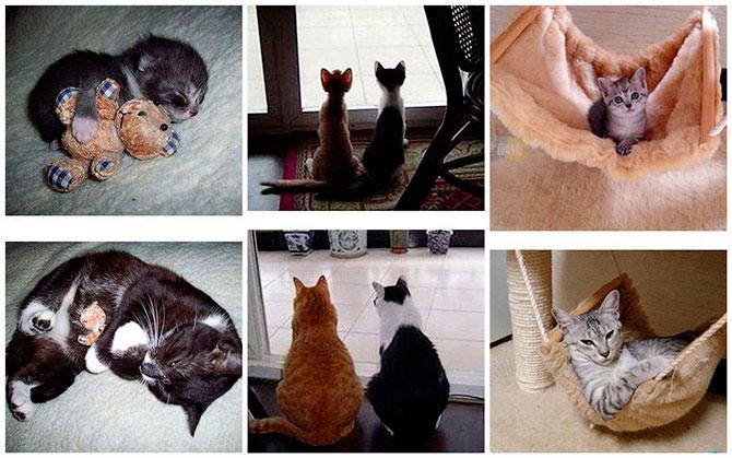 Кошки – тогда и сейчас
