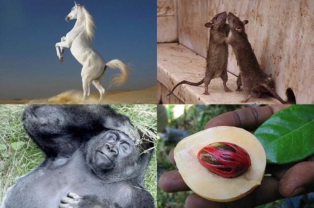 10 удивительных странностей природы