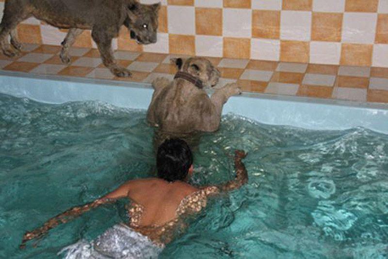 catsncars07 Хищные кошечки и дорогие машины: досуг арабского миллионера