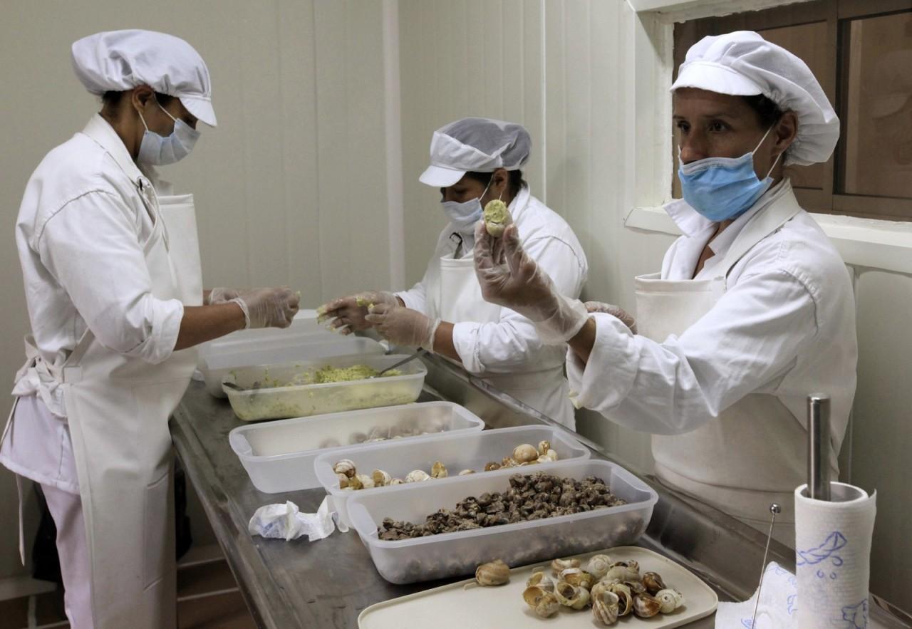 Мясо приготовленных садовых улиток (Helix Aspersa) помещают обратно в раковины и упаковывают в пакеты.