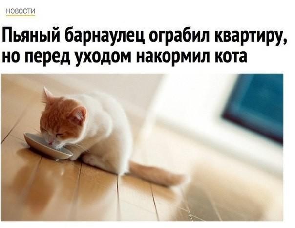Очередная подборка картинок с подписями животные, картинки с подписями, подборка, позитив, юмор
