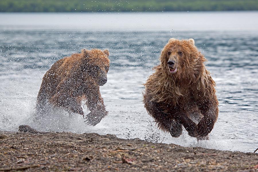 Фоторепортаж . Камчатка - Земля медведей.