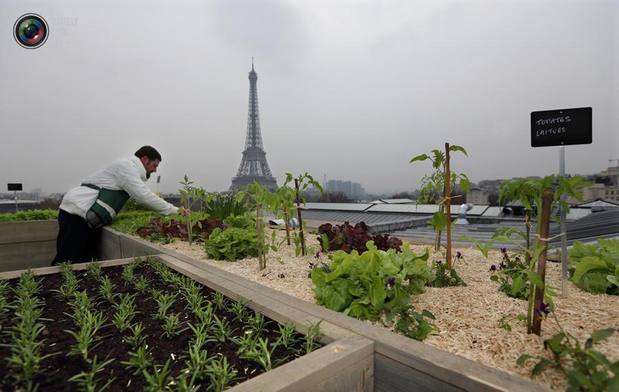 Прекрасные сады на крышах домов