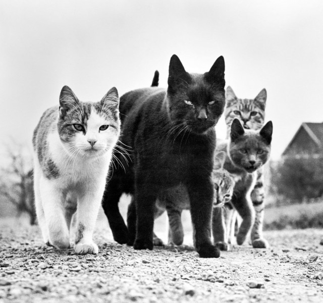 Уолтер Чандоха – человек, который 70 лет фотографировал кошек