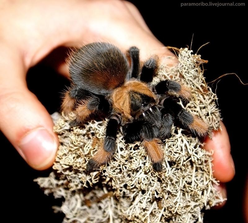 Как сделать пауков в домашних условиях