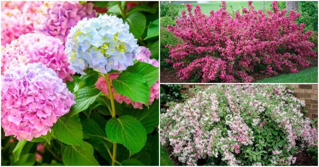 Разноцветные кустарники на участке: чарующее великолепие сада