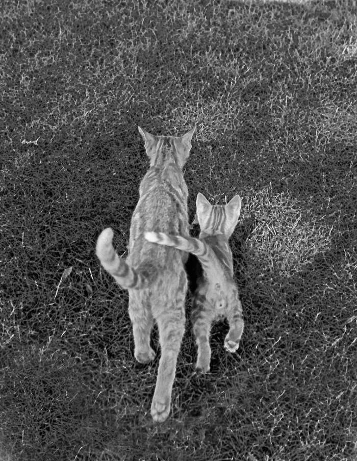 Уолтер Чандоха – человек, который 70 лет фотографировал кошек   27 1