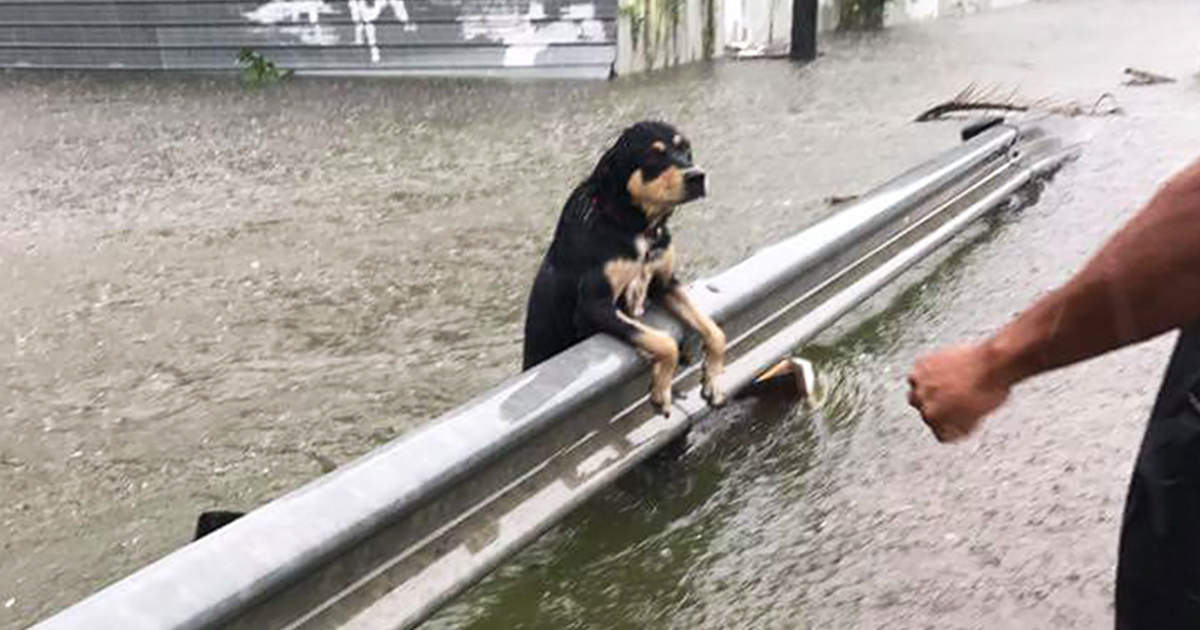Some People Left Their Dogs Tied Up To Die In The Flood And It Will Break Your Heart