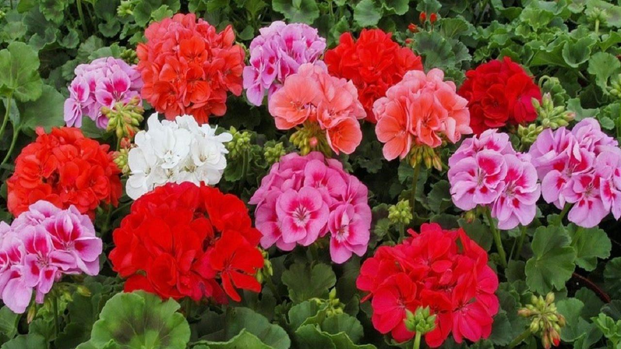 В каждом доме должен быть этот цветок!