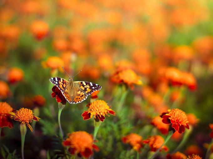 10 великолепных растений, цветущих в сентябре