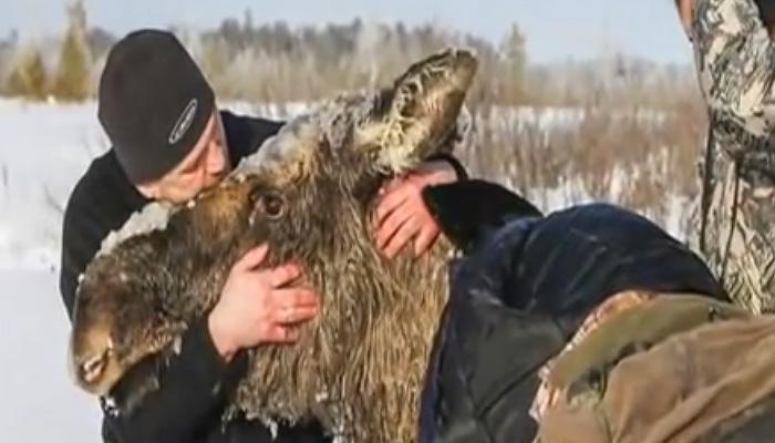 Сильное видео о людях, которые спасают животных, попавших в беду