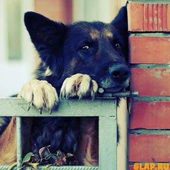 История про собаку, у которо…