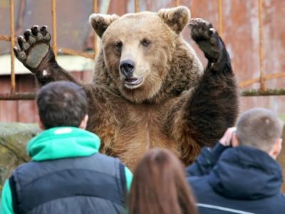 Медведи, танки, много нефти и Путин