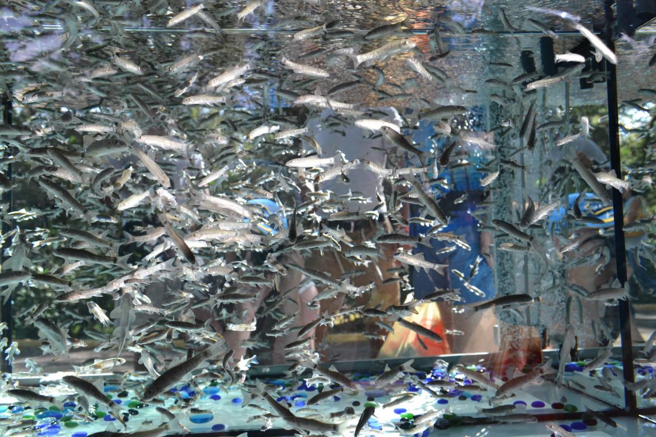 Экзотическая косметология: Пилинг рыбками Гарра-Руфа