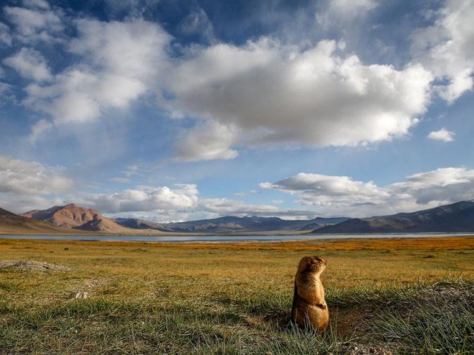 Лучшие фотографии National Geographic за июль 2014
