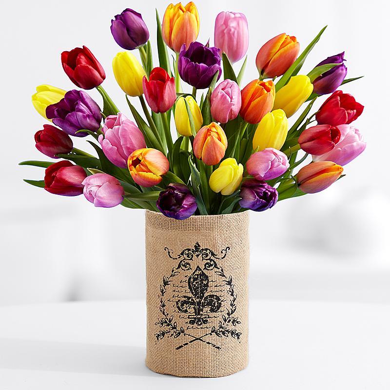 Виды и сорта тюльпанов