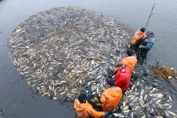 правила ловли рыбы в запретный период
